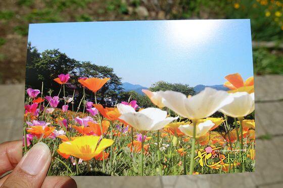 花の里ハナビシソウ園 ポストカード
