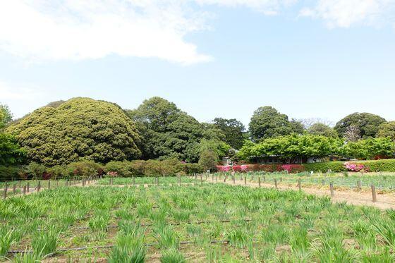 館林花菖蒲園