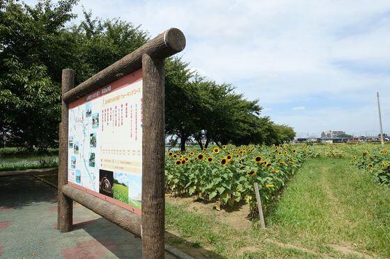 牛島古川公園