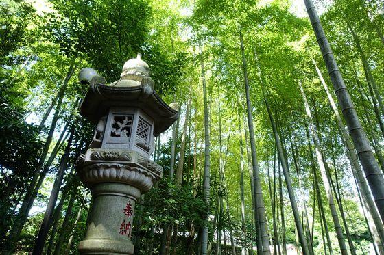 正覚寺 竹林
