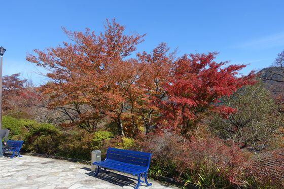 強羅公園 箱根 紅葉