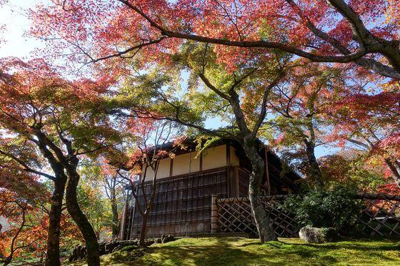 箱根美術館 紅葉 見頃