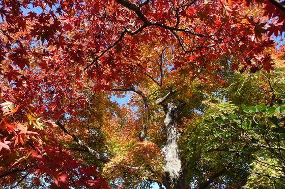 箱根美術館 紅葉 現在