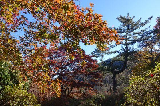蓬莱園 箱根 紅葉