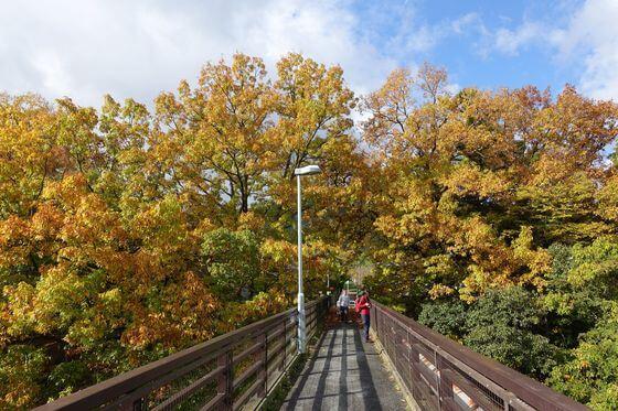 金石水管橋 紅葉 現在