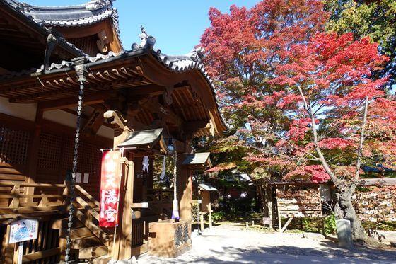 懐古神社 モミジ