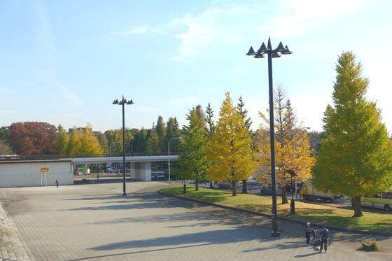 駒沢公園 銀杏並木