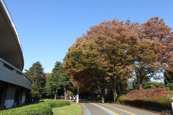 駒沢公園 秋