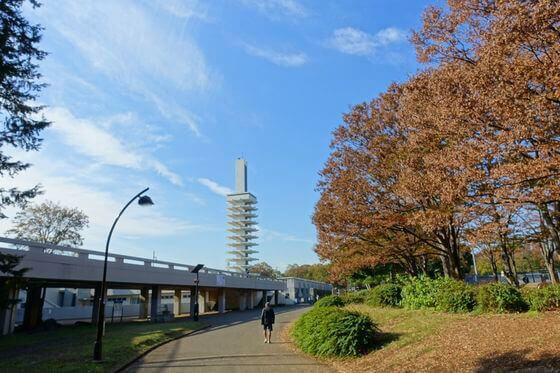 駒沢公園 自由広場 紅葉