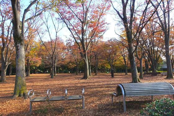駒沢オリンピック公園 自由広場 紅葉