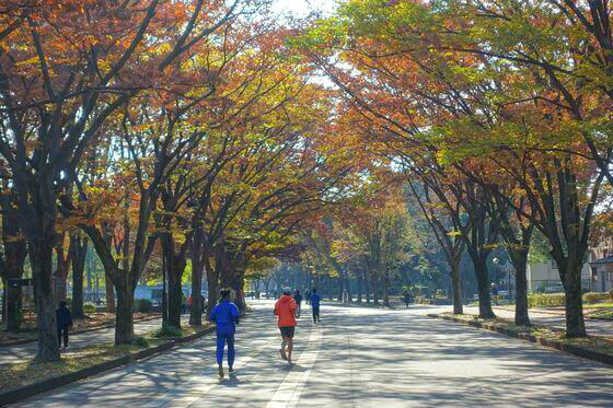 駒沢オリンピック公園 紅葉 見頃