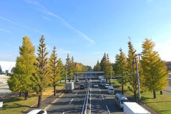 駒沢オリンピック公園 紅葉