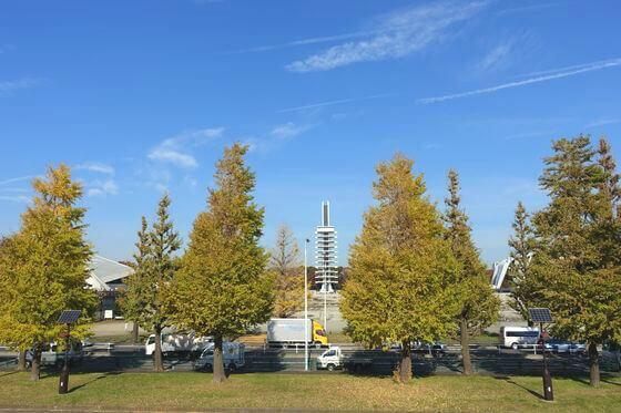 駒沢オリンピック公園 イチョウ