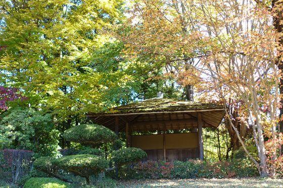 小諸ワイナリー 日本庭園 紅葉