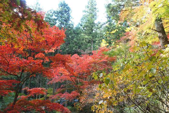 東郷公園 紅葉 ハイキング