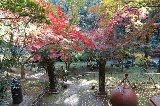 飯能 東郷公園 紅葉