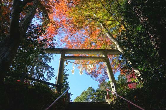 東郷公園 秩父御嶽神社 紅葉