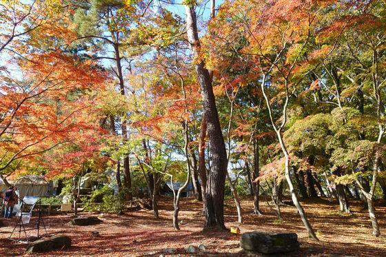 埼玉 月の石もみじ公園 紅葉
