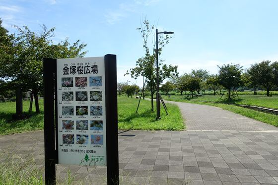 金塚桜広場