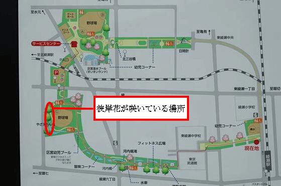東綾瀬公園 彼岸花 場所