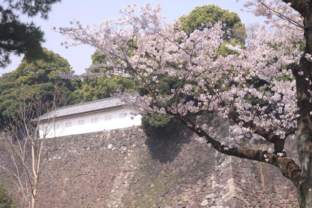 富士見多聞 皇居 桜