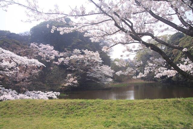 道灌濠 皇居 桜