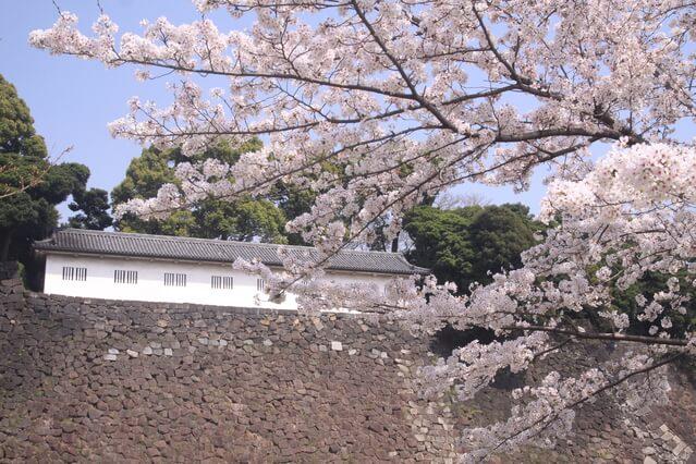 乾通り 桜