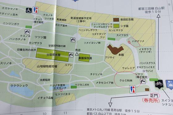 小石川植物園 彼岸花 場所