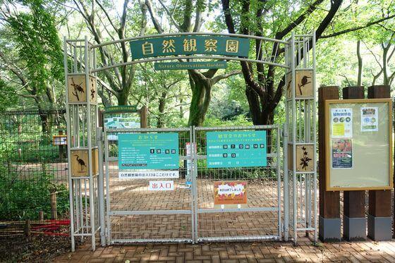 野川公園 彼岸花 自然観察園