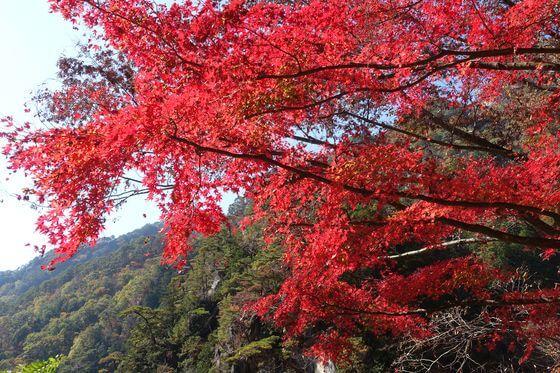 昇仙峡 紅葉 現在