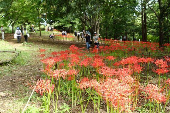 昭和記念公園 眺めのテラス南西花壇