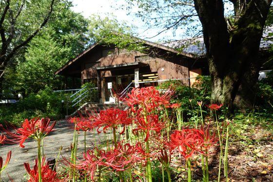 昭和記念公園 こもれびの家
