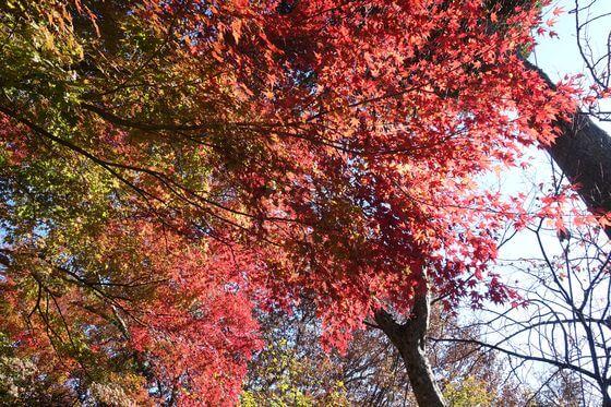 堂ヶ島渓谷遊歩道 紅葉 見頃