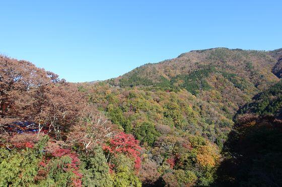 八千代橋 箱根 紅葉