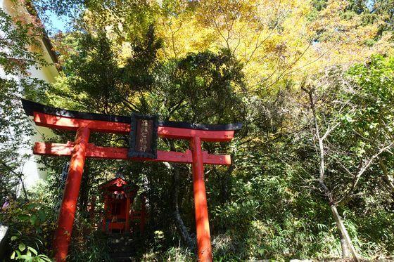 箱根神社 紅葉