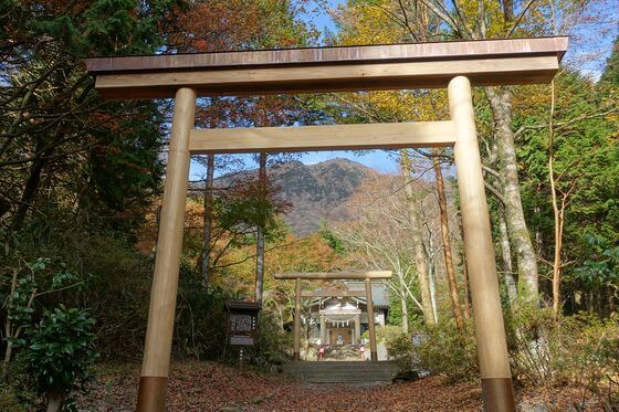 金時神社 紅葉