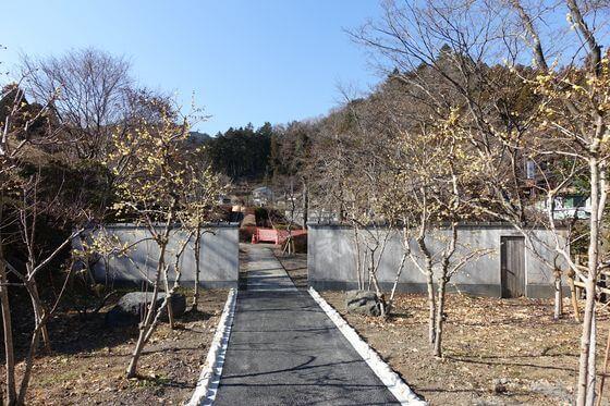吉野梅郷 日本庭園 ロウバイ