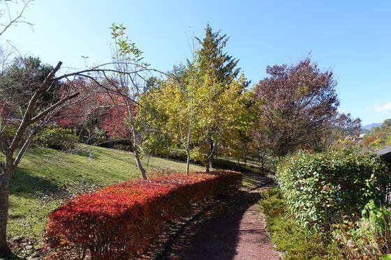 紅葉 猿橋公園