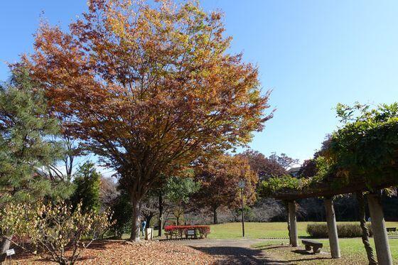 猿橋公園 紅葉 現在