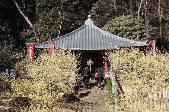 清水寺 ロウバイ