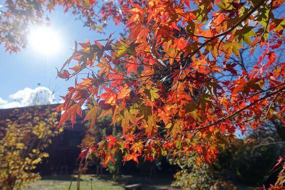 埼玉県立自然の博物館 紅葉 現在