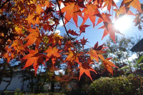 埼玉県立自然の博物館 紅葉 ライトアップ