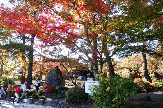 埼玉県立自然の博物館 モミジ