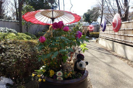 上野 牡丹園 冬