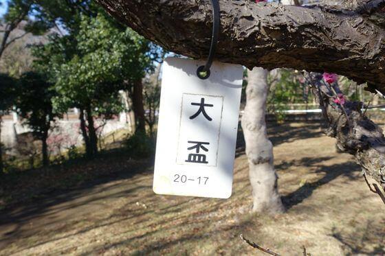 千葉県立青葉の森公園 梅