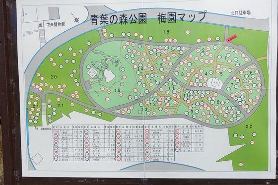 青葉の森公園 梅園マップ