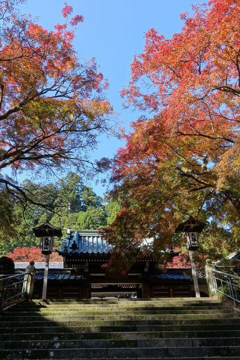 最乗寺 瑠璃門 紅葉