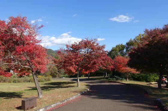紅葉 秦野戸川公園