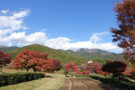 秦野戸川公園 紅葉