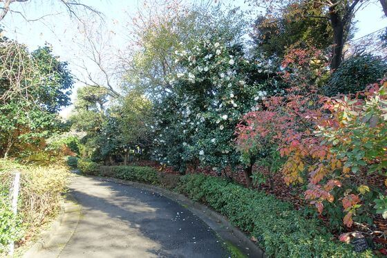花と緑の振興センター 東園 紅葉